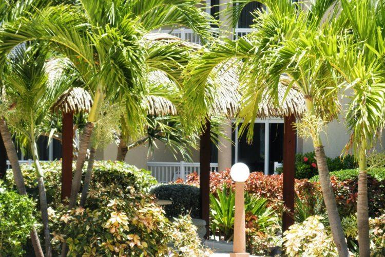 Hotel in Grand Cayman | Holiday Inn Resort GRAND CAYMAN - TiCATi com